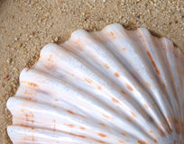 Shell in sand Stock Photos