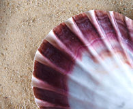 Shell in sand Royalty Free Stock Photography
