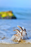 Shell on sand. And waves in summer time Royalty Free Stock Photos