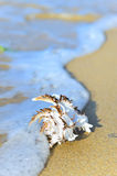 Shell on sand Stock Photography