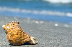 Shell in the sand Royalty Free Stock Image