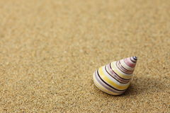 Shell on sand Stock Images