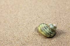 Shell on the sand. A conch shell on the sand Stock Images