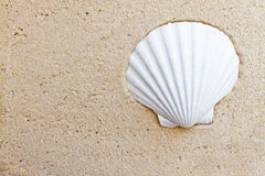 Shell in the sand Stock Photos
