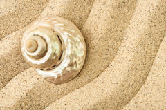 Shell on a sand Stock Images