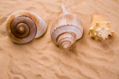 Shell in the sand Royalty Free Stock Photos