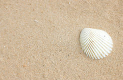 Shell On Sand. arkivbild