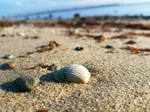 Shell and sand against blue sky and balticsea royalty free stock photo
