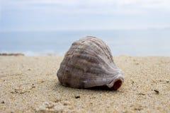 Shell on sand Stock Image