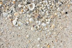 Shell sand background Royalty Free Stock Photos