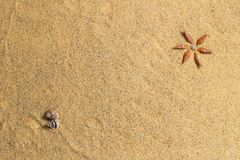 Shell and sand background. Royalty Free Stock Image