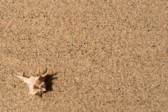Shell on the sand, background. One shell on the sand, background Stock Images