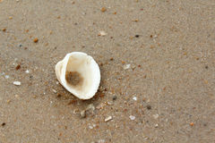 Shell on the sand Royalty Free Stock Image