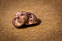 Shell on Sand Royalty Free Stock Photo