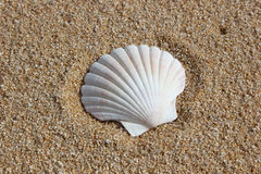 Shell on sand Stock Photos