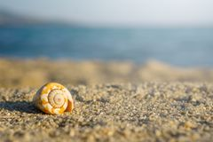 Shell on sand at the beach. Blue sea on background.  royalty free stock photography