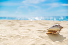 Shell on sand at beach and blue sky and bokeh sea. Royalty Free Stock Images