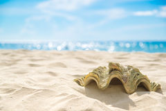 Shell on sand at beach and blue sky and bokeh sea. Stock Photo