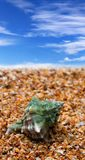 Shell on sand beach. And blue sky with clouds at sun summer day Stock Image