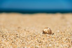 Shell in the sand on the beach - consept of holidays and vacation Stock Photo