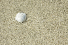 Shell on the sand Royalty Free Stock Photos