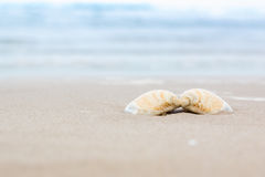 Shell. On sand at beach with sea blur background Royalty Free Stock Photo