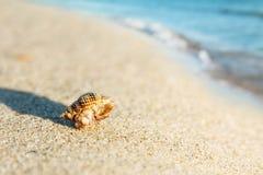 Shell on sand beach Stock Photo