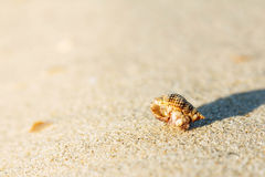 Shell on sand beach Royalty Free Stock Images