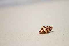 Shell on sand beach Royalty Free Stock Photography