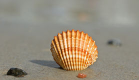 Shell on a sand. Royalty Free Stock Photo