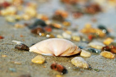 Shell on a sand. Royalty Free Stock Photos