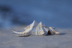 Seashell on sand with blue background Stock Photo