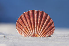 Seashell on sand with blue background Stock Photos