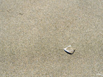 Shell in the sand Stock Image