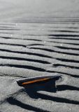Shell in sand Stock Image