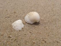 Shell. The sand creatures that are called shells Stock Photography