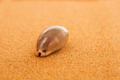 Shell on the sand. Shell on the desert sand Royalty Free Stock Images