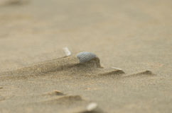 Shell in sand dune Stock Photos