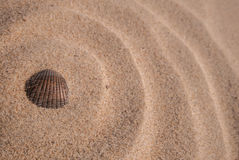 Shell in the Sand Stock Photography