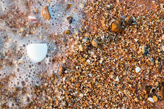 Shell, sand, gravel and sea water background Royalty Free Stock Photo