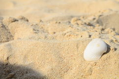 Shell on sand Royalty Free Stock Image