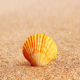 Shell on sand - instagram effect Stock Images