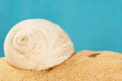 Shell on sand Royalty Free Stock Photos