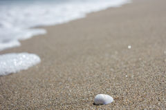 Shell in the sand Stock Images