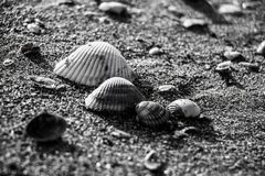 Shell on the sand. Lost in a beach somewhere, photographed in black and white stock images