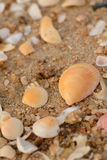 Shell on the sand Stock Photo
