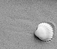 Shell on sand Stock Image