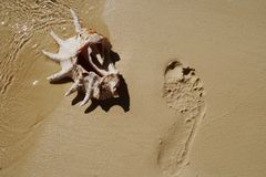 Shell on sand near footprint. Royalty Free Stock Photo