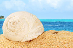 Shell on sand od the Caribbean Stock Image