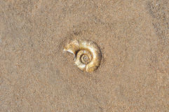 Shell and sand Stock Photos